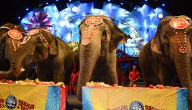 Ringling Bros. And Barnum & Bailey Presents 'Circus XTREME' VIP Celebrity Red Carpet Premiere