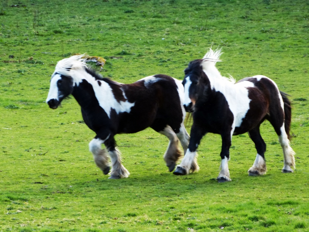 Miniature Horses On Grassy Field