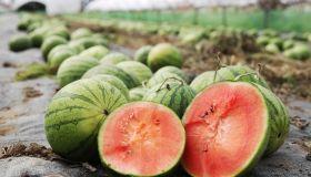 Asda grow 8,000 British watermelons having a 1,230% increase